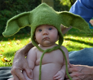 Remy in his felted Yoda Hat