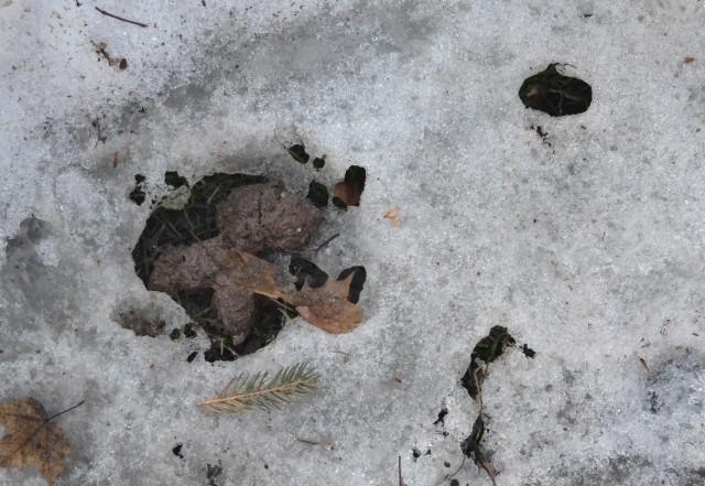 springtime doggie poop